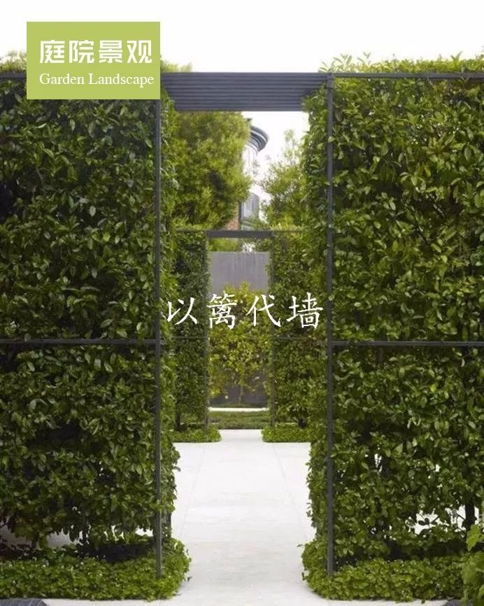 绿篱作墙丨围住尘世的喧嚣,围不住满园的芬芳