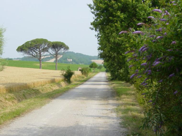 珠三角区域绿道(省立)规划设计技术指引