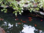 中国古典园林| 留园