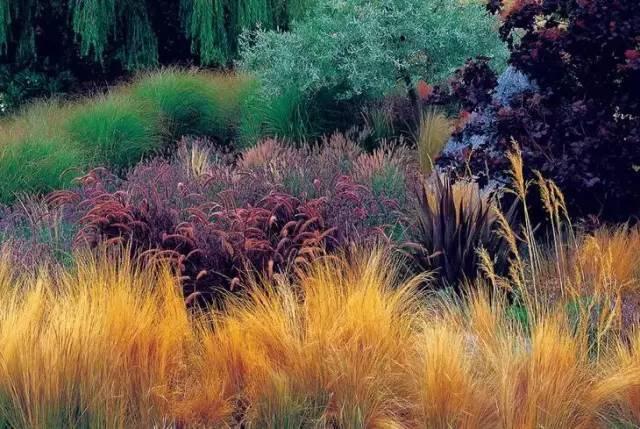 深秋的山草,美如画_1