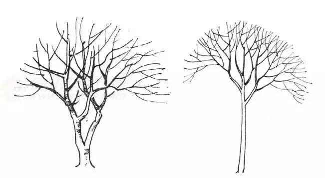 作为景观设计师必须掌握的景观线稿表现_13