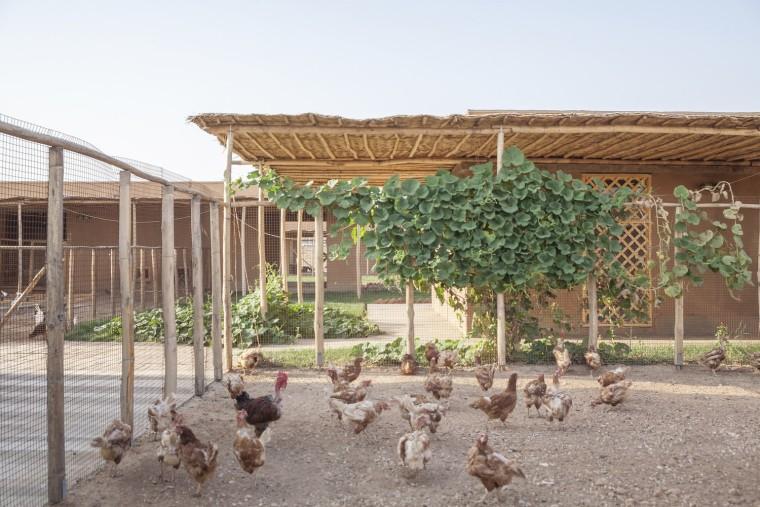 伊拉克动物辅助疗养中心-4