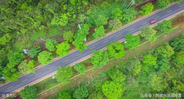 市政道路绿化工程施工具体方案和措施_4