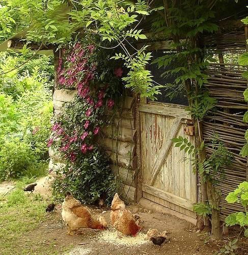 你真正需要的,也许只是一个小院,看繁花爬满篱笆_14
