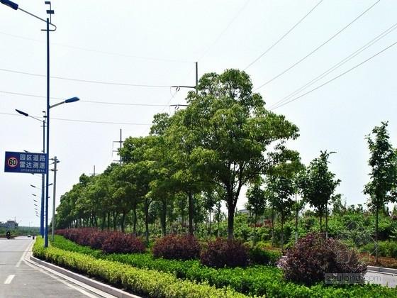 城市次干路工程道路绿化全套施工图