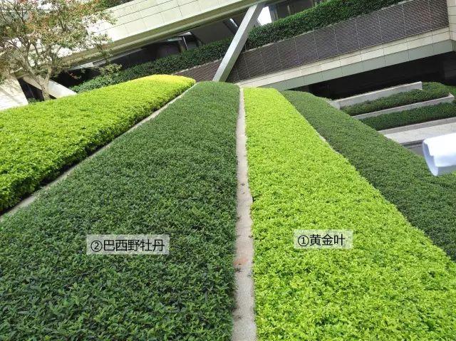 最详细图解:深圳湾三大豪宅景观植物配置!_17