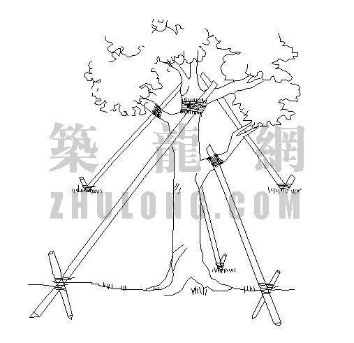 大树栽植支架标准详图