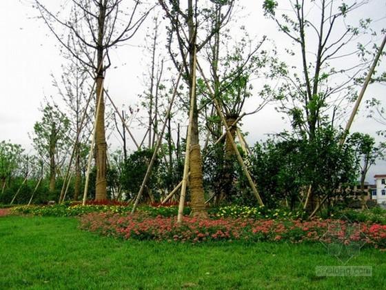 [宁夏]产业园景观绿化工程监理大纲(总绿面积20万平米)