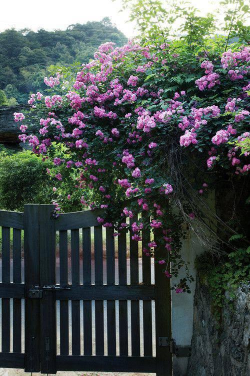 想要一个小院子,花开花落一辈子_28