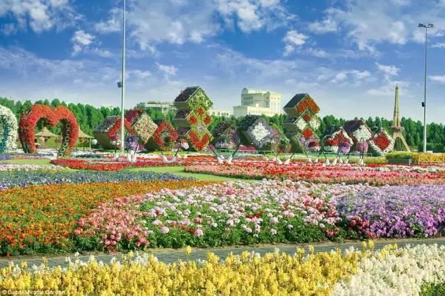 迪拜的花卉展览,全世界规模最大!你肯定没看过!_12