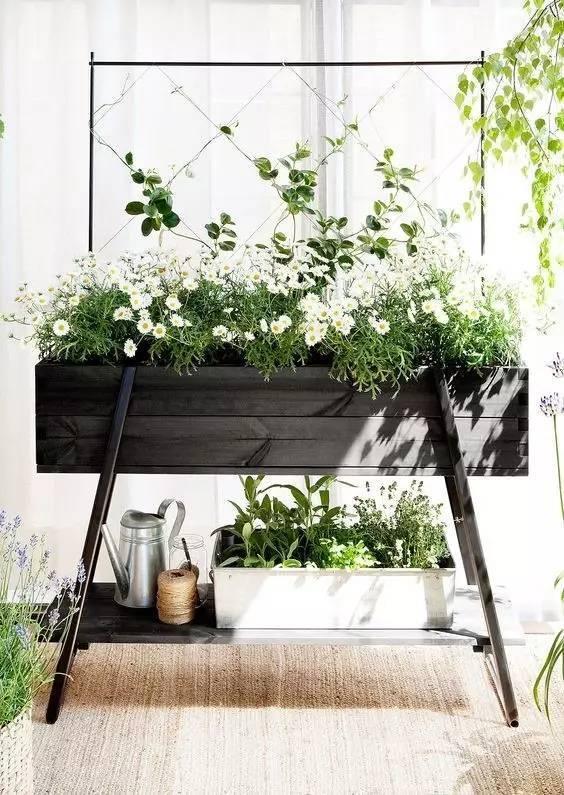 植物才是最美的隔断_11