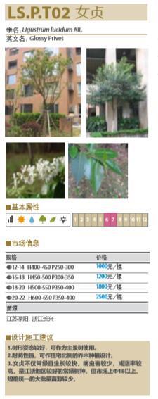 大型地产公司绿化绿皮书(做法与验收标准)-大型地产公司景观植物绿化绿皮书-10女贞植物基本属性与施工建议