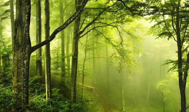 林下地被植物的应用及配置_5