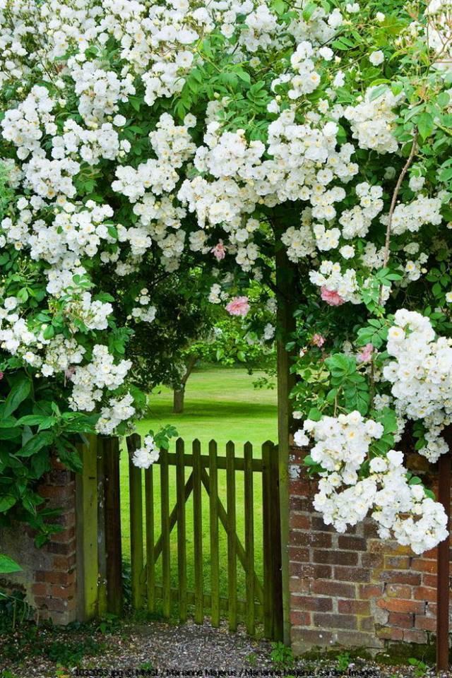 想要一个小院子,花开花落一辈子_3