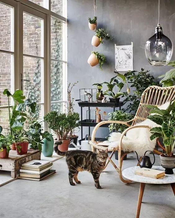 做梦都想要一个这样的绿植阳台,太喜欢了