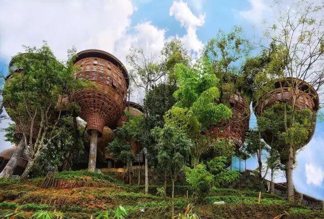 这些树屋,满足你对森林的所有幻想_40