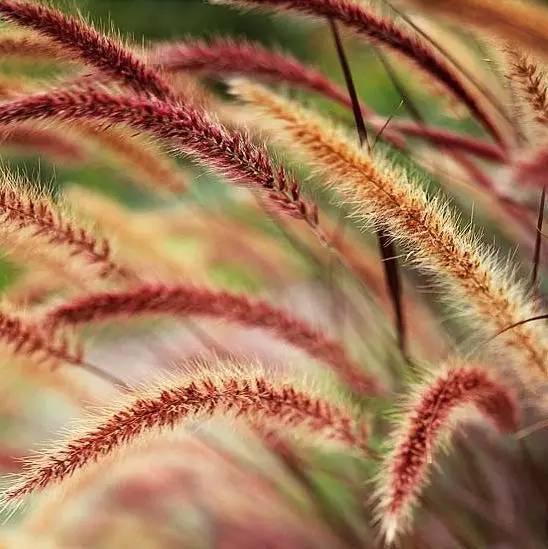 深秋的山草,美如画_24