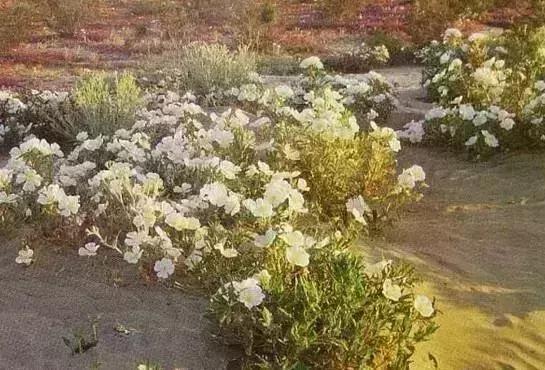 植物界的吉尼斯世界纪录大全-640.webp (13).jpg