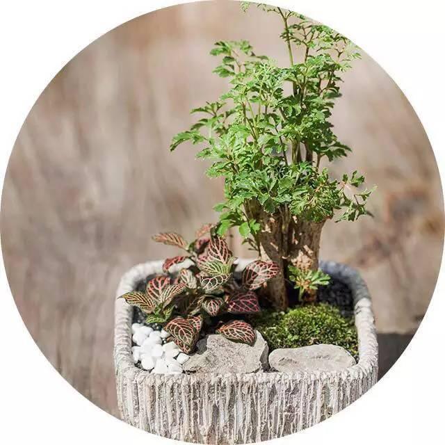 绿植这样摆,你家比园林还要美!_1
