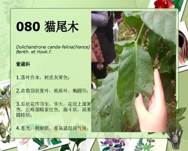100种常见园林植物图鉴-20160523_183224_102.jpg