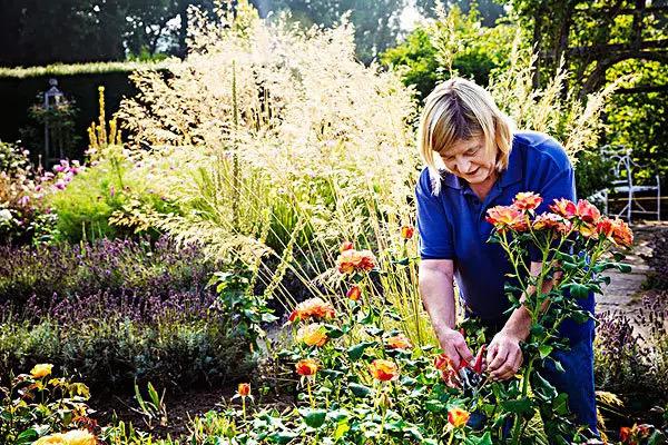 小妙招|庭院植物秋季养护