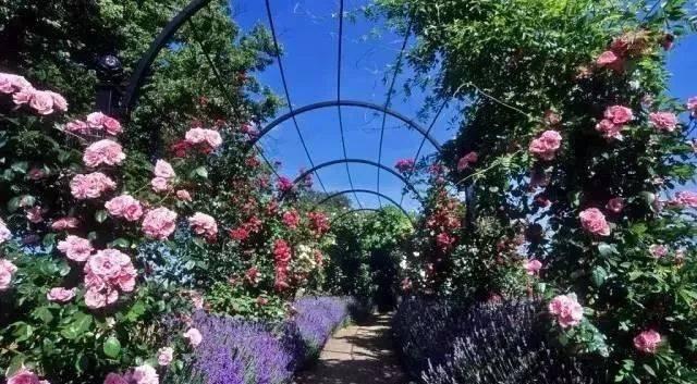 做自己庭院的设计师,造园或许没有想象的那么难!_5