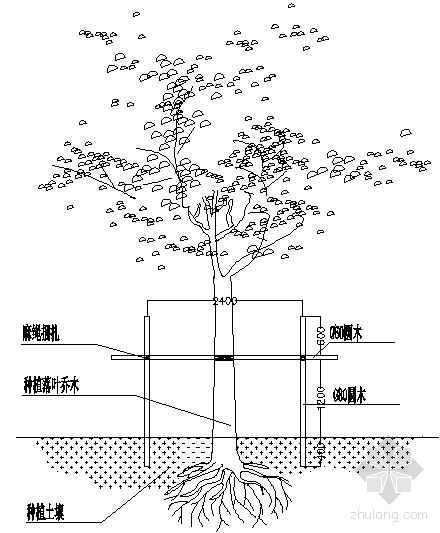 落叶乔木栽植支架详图
