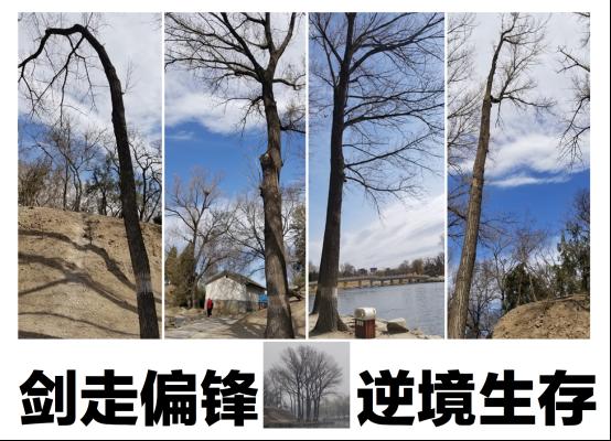 """第四届""""中国人居环境设计学年奖""""新闻发布会在清华大学启动_2"""