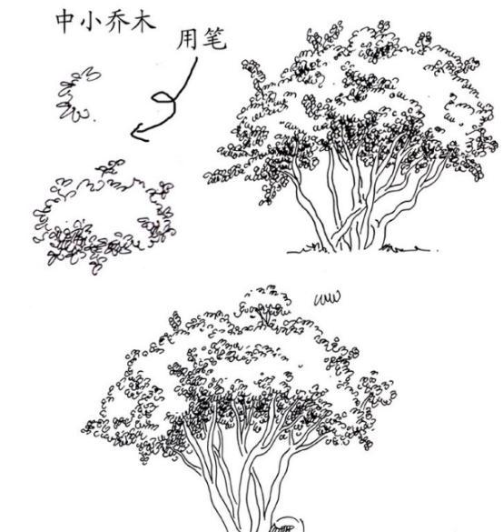 景观植物手绘图