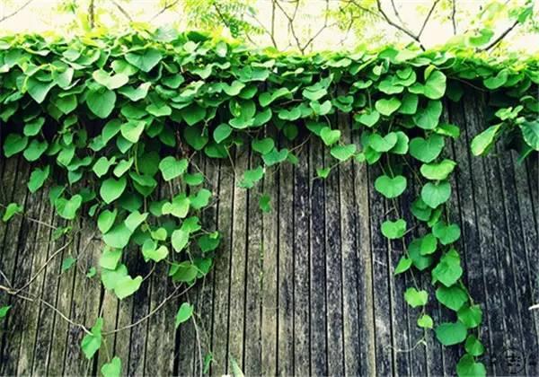 你真正需要的,也许只是一个小院,看繁花爬满篱笆_4