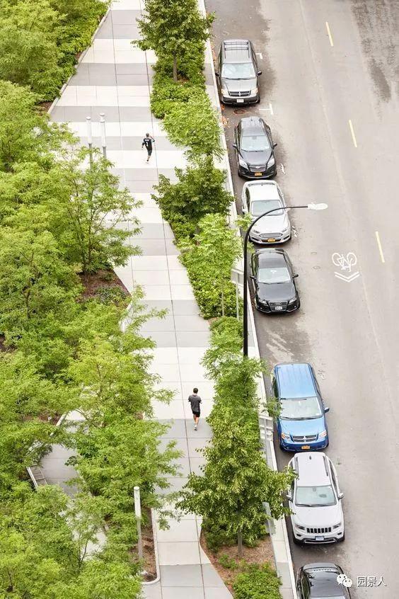 城市干道植物配置,实用干货不得不看!_20