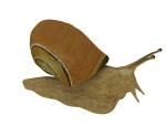 蜗牛3D模型下载
