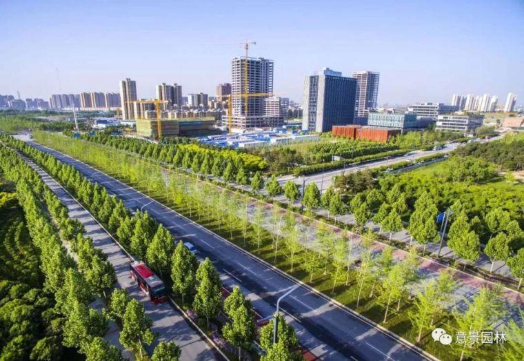 路边那些不起眼的植物,居然是打造海绵城市的关键