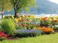 [花园设计]花园设计图_入户花园设计_花园植物配置