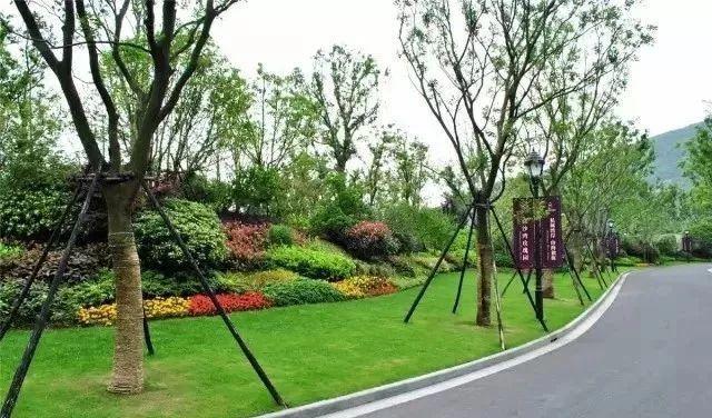实用 景观植物设计方法(图文解析,值得收藏)_27