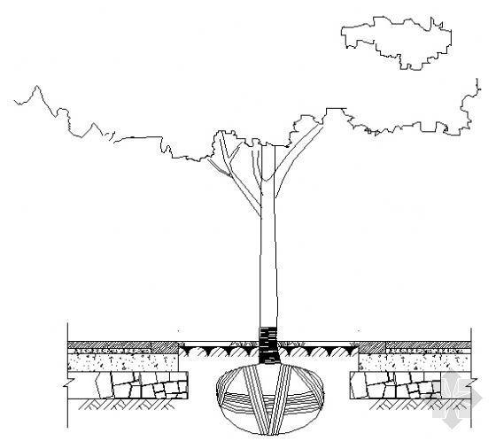 树池剖面图
