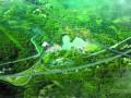 [浙江]公铁立交桥跨铁路变截面连续刚构支架现浇法实施性施工组织设计112页