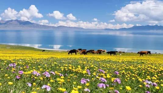 中国最美的20个地方,看看你去过几个?_48