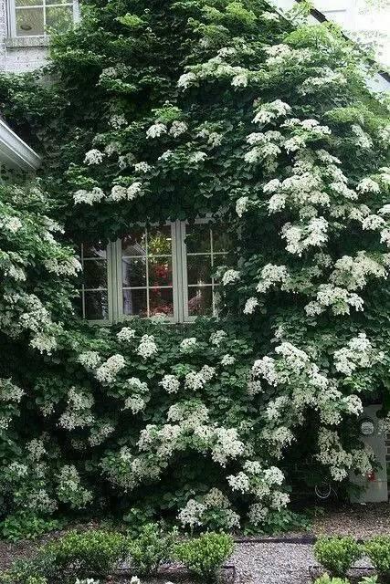 攀缘植物竟然可以如此美!_14