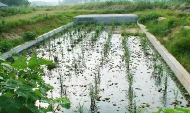 19经典案例,构建雨水花园可持续生态的迷人景观