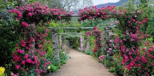 最会爬墙的26种植物,花墙、花窗、花海、花门最适合