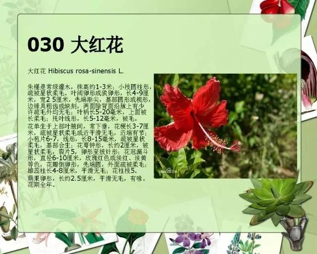 100种常见园林植物图鉴-20160523_183224_035.jpg