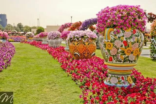 迪拜的花卉展览,全世界规模最大!你肯定没看过!_30