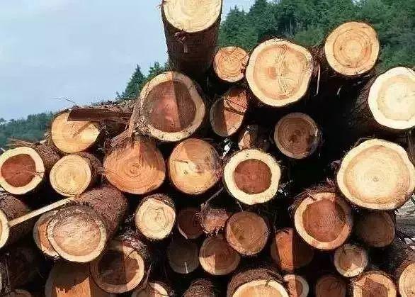 家具用木图解