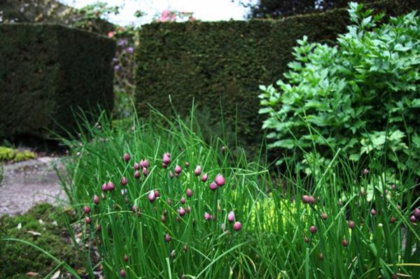 花园欣赏——艾蕾府邸花园_32