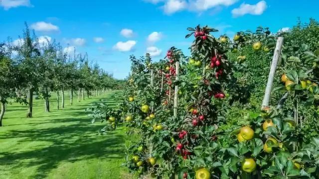 农业景观设计|农场建设:采摘果园怎么设计才吸引人……