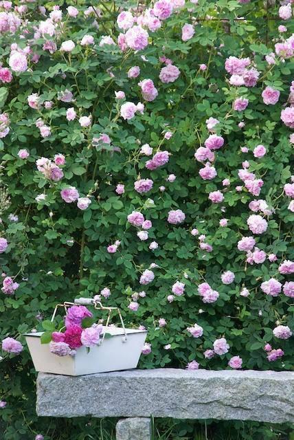想要一个小院子,花开花落一辈子_22