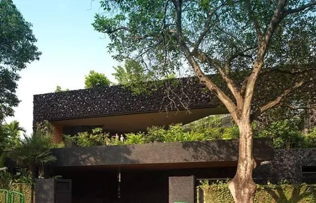 在自己家的屋顶上建梯田,送城市一份乡村之乐!_8