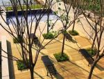 树阵景观 · 律动的规则