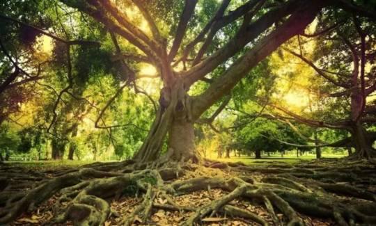 苗木常见根部病害及防治办法汇总